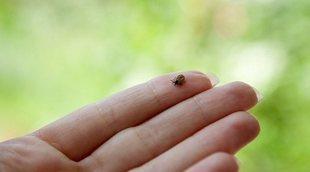 En qué consiste la enfermedad de Lyme en niños
